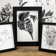 Illustrations White Thistle Design